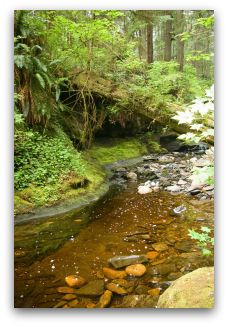 BC_stream_-_photo_by_Jeffery_Young_(1)